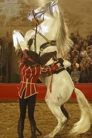 El caballo español nace en Córdoba de la mano de Almanzor, con sede en las Caballerizas reales.