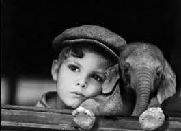 niño y elefante